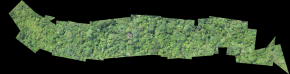 DroneMapper processed orthorectified mosaic from Conservation Drones' Orangutan Nest Hunt transect.