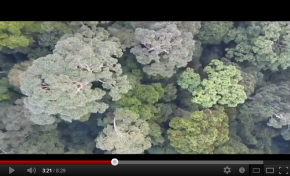 Video of conservation drone flight over Sepilok by ecologist, Chris Kettle. This is a Conservation Drone 1.0 (Bixler prototype) carrying a Canon IXUS 220 camera (video mode).