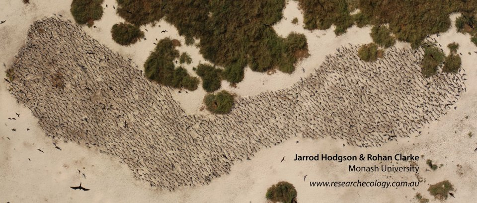 Remote island seabird monitoring