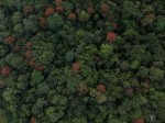 Tropical forest phenology