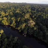 Aerial of the Central Suriname Nature Reserve