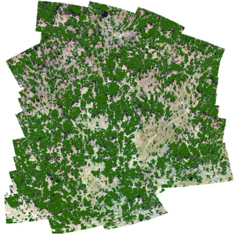 Digitized trees layer generated by EnviDrone