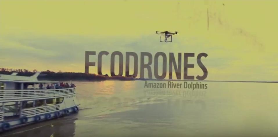 Amazon river dolphins